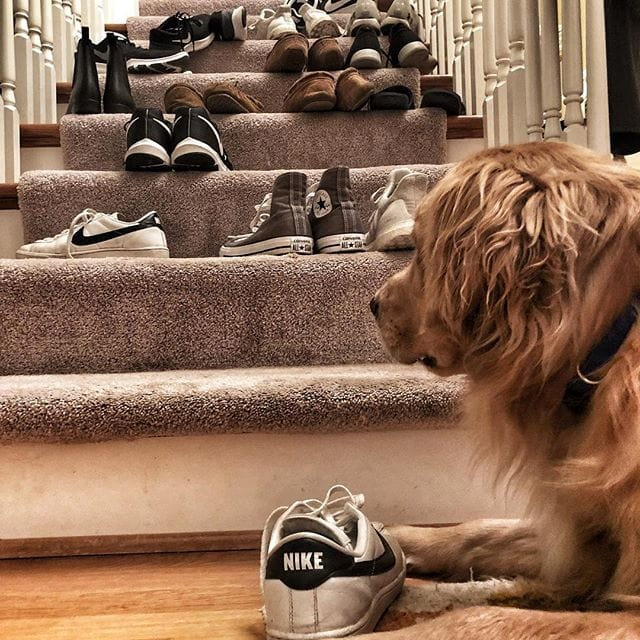 So many shoes… So many choices. 🐕👞 🏊‍♂️team potluck Follow along @ #indyandriley